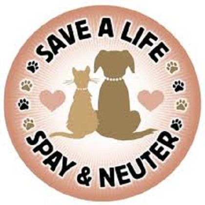 Spaying And Neutering. The Benefits of Spaying and Neutering | PetsBlogs.com
