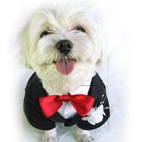 Christina Cline Doggie Tuxedo