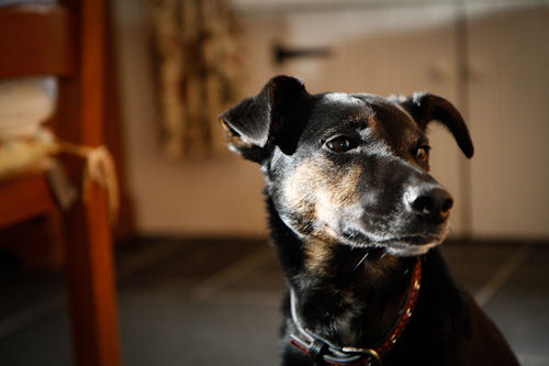 Wordless Wednesday Daffy Petsblogs