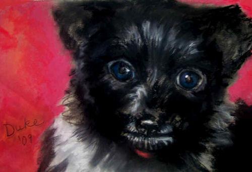 duke puppy