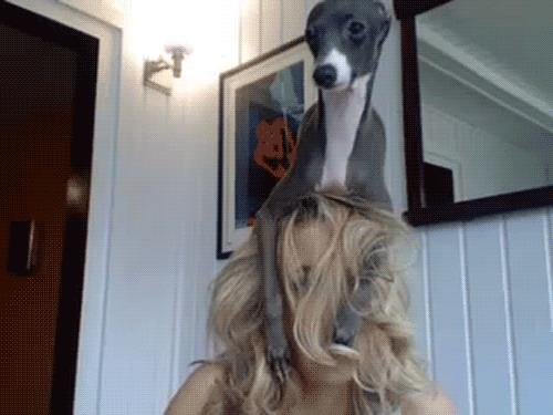dog on woman's head