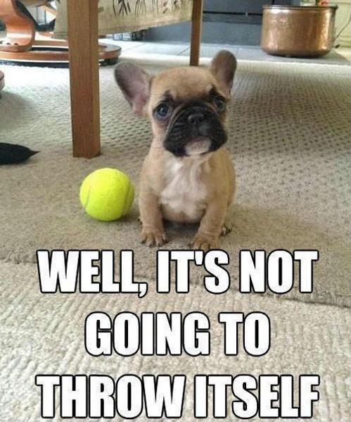 cute dog and yellow tennis ball
