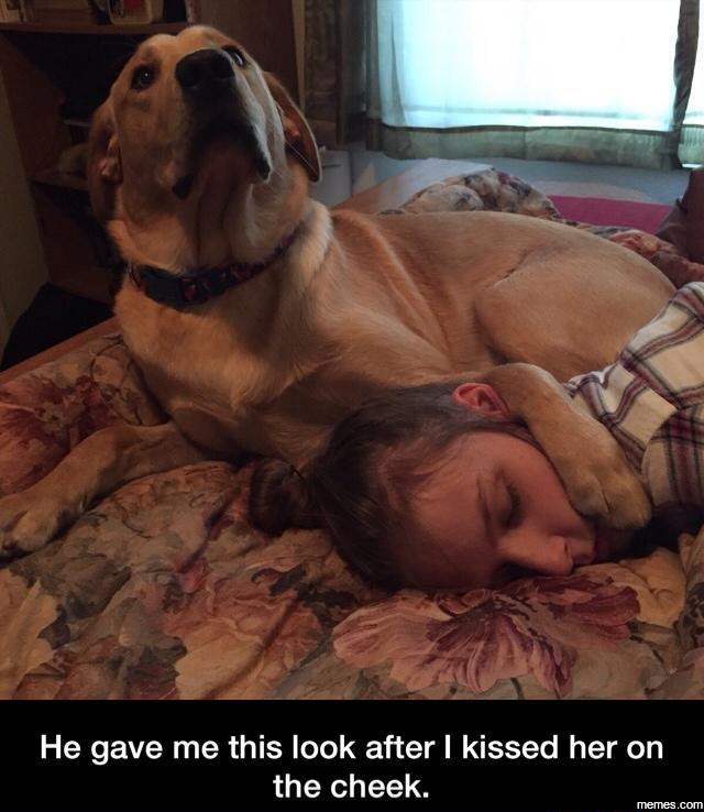 dog protecting sleeping girl