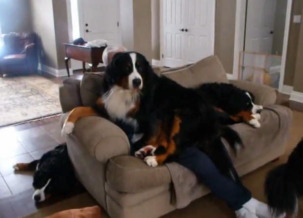 dog laying on person