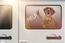 mastiff dog locked in hot car