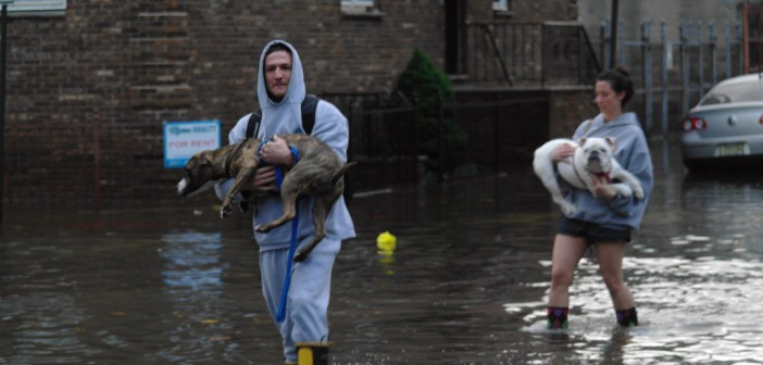 carrying dogs through flood water