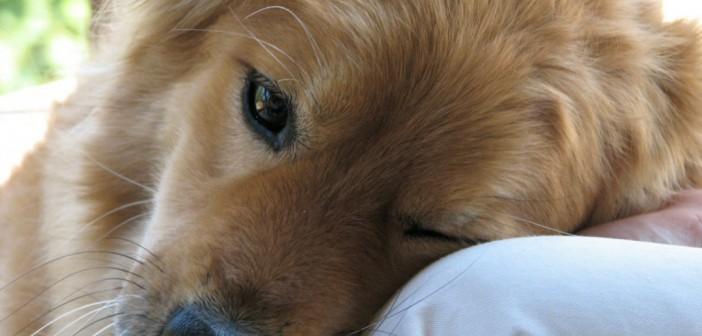 bond between dog and human