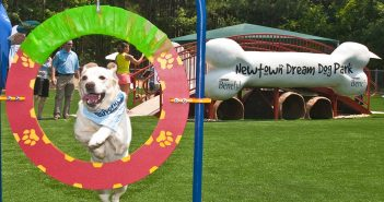 newton beneful dream dog park