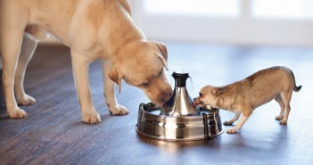 PetSafe Drinkwell 360 Fountain. (PRNewsFoto/PetSafe)