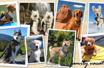 AAA pet vacation contest postcard