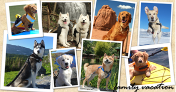 AAA pet vacation contest postcard