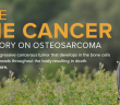 canine bone cancer infographic header