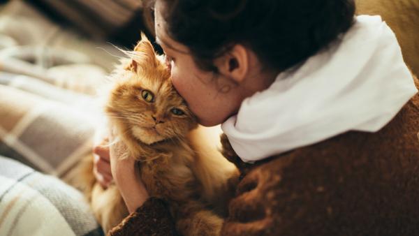 cat-awkward-affection
