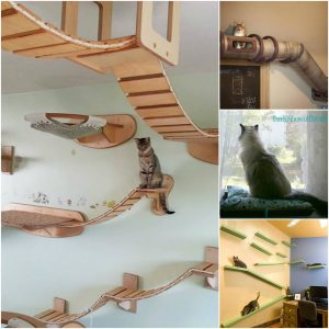 collage of cat home customization examples