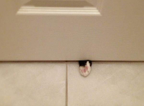 cat pawing under the bathroom door