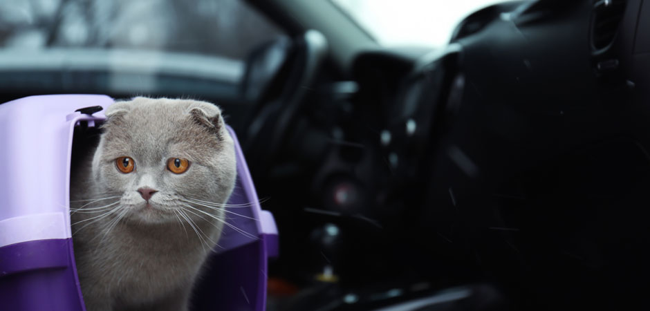 cat and a pet carrier inside a car