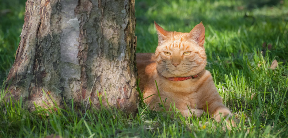 cat lounging under a shade tree in summer