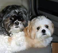 ceasar and milo from organic pet boutique
