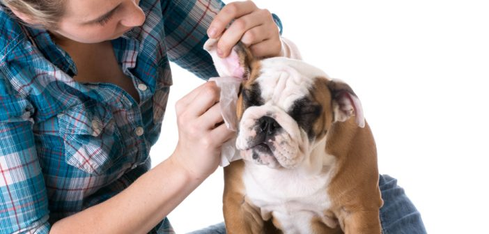 5 Do-It-Yourself Pet Grooming Tips