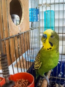 convince-boss-office-pet-birds