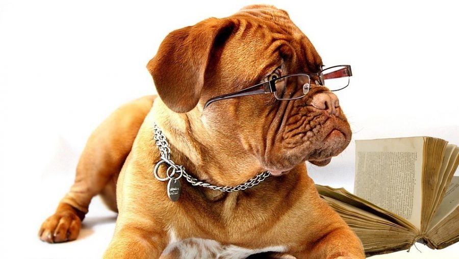 convince-boss-office-pet-studious