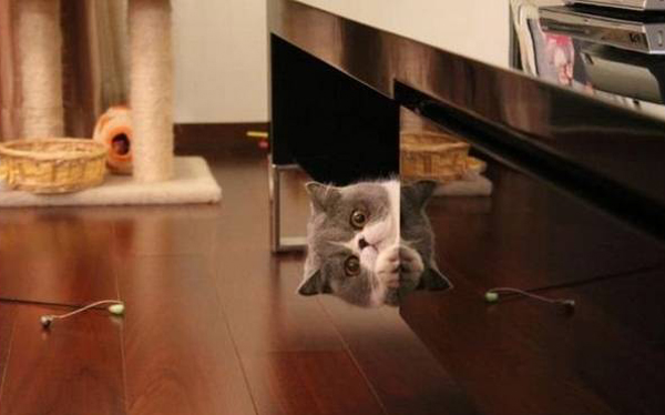 office cat peeking around the desk