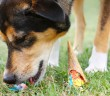 dog eating ice cream cone that he found on the ground