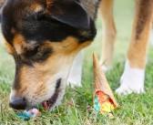 I Bark, You Bark, We All Bark for… Ice Cream?