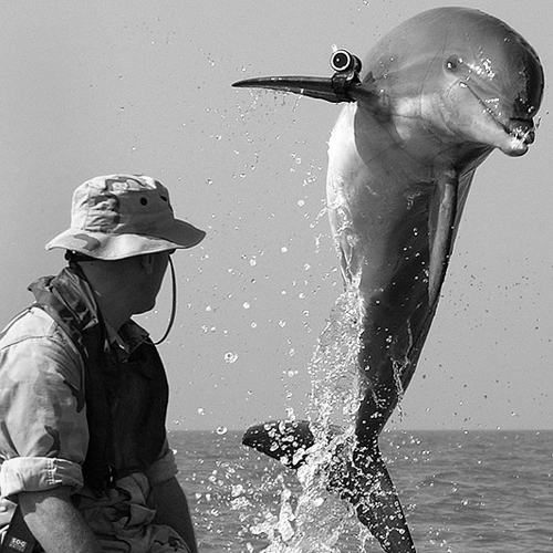 dolphin and marine biologist
