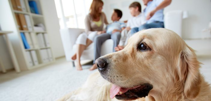 family dog in the foreground in front of his family in the living room