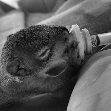 person feeding a baby squirrel