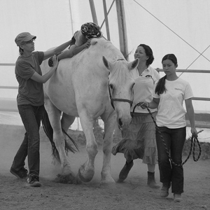 equine therapy session
