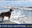 single dog on the beach