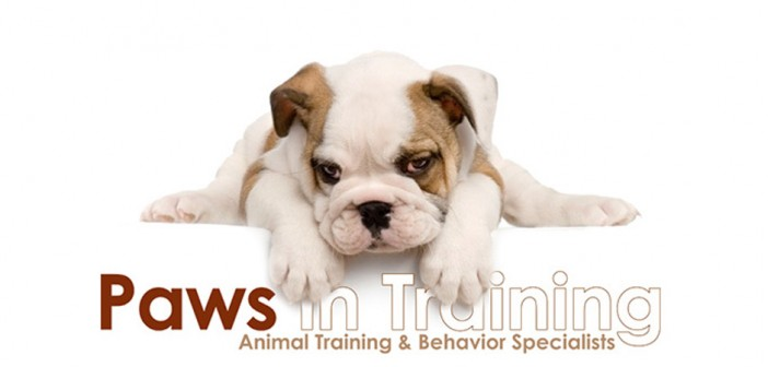 paws in training logo