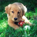 cute puppy with play toys in the grass