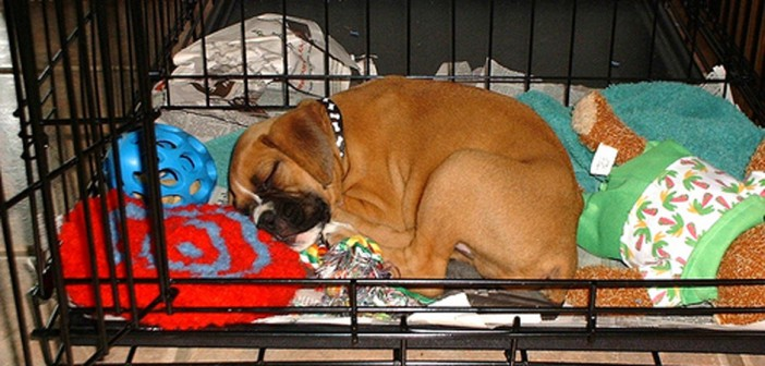 puppy sleeping in his crate