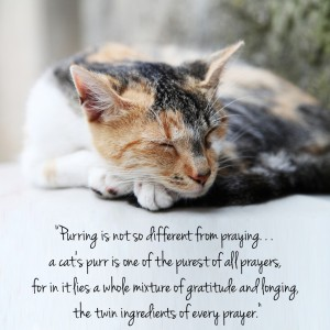 purring cat quote
