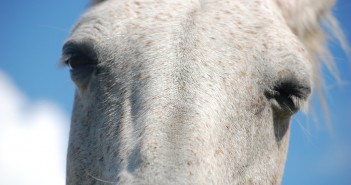 close up of sleepy horse eyes