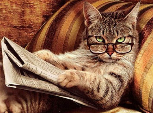 cat with glasses reading the paper staring at you