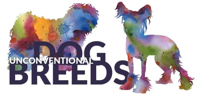 puli and chinese crested dog breeds in watercolor