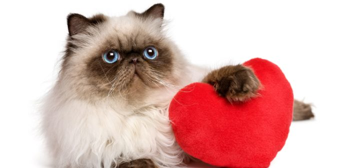 15 Signs Your Cat Loves You