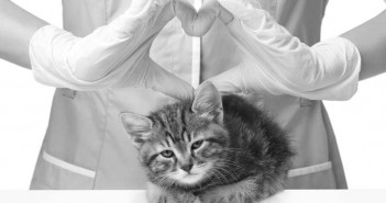 vet with a kitten