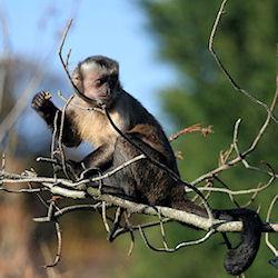 Mackinac Island monkey?