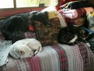 Photo courtesy of Traveling Pets