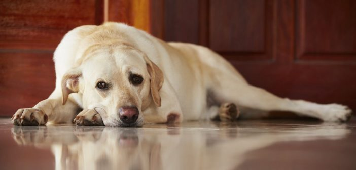 Ways To Ease Dog Boarding Anxiety