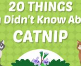 Kitty Crack Infographic
