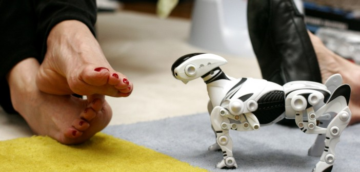 robotic pet