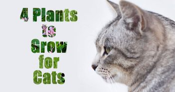 4 cat plants