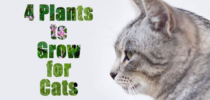 4 Plants to Grow for Your Cats (and 10 to Avoid)