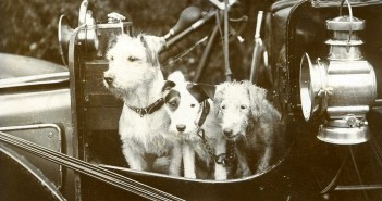 vintage photo of 3 dogs sitting in a classic car